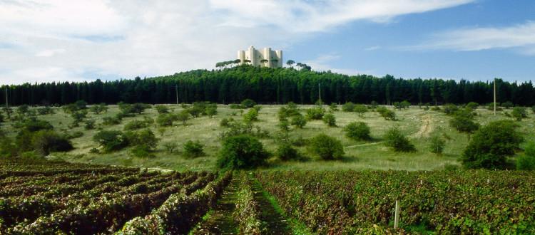Itinerari - Castel del Monte - Strada dei Vini DOC Castel del Monte